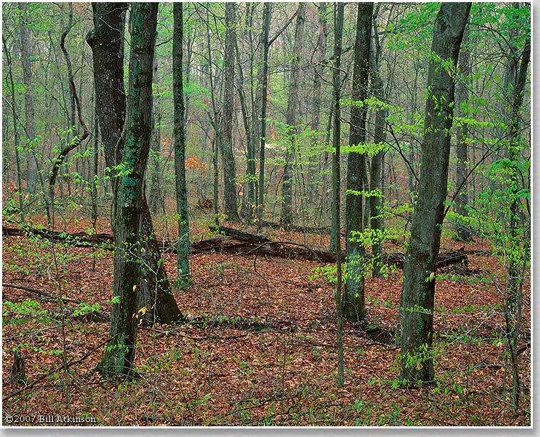 Šuma - Page 3 1646_WebImage