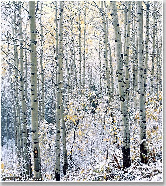 Šuma 1827_WebImage